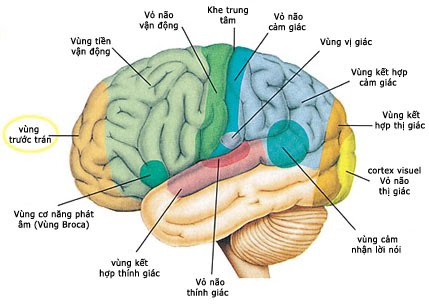 Suy nhược thần kinh ảnh hưởng đến các vùng chức năng của não